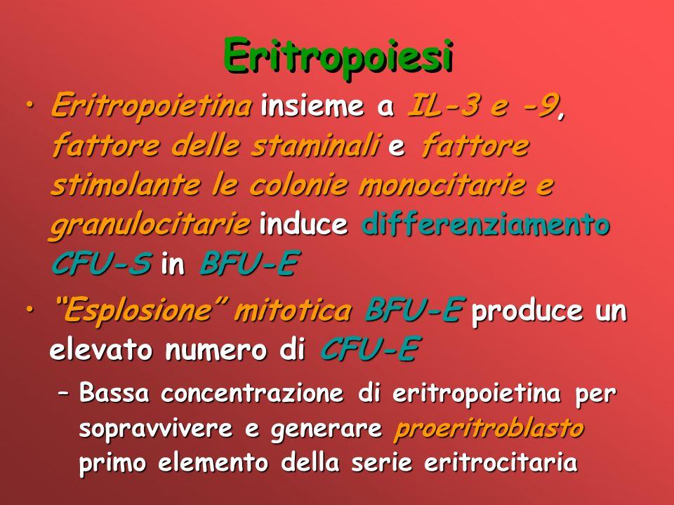 Eritropoiesi