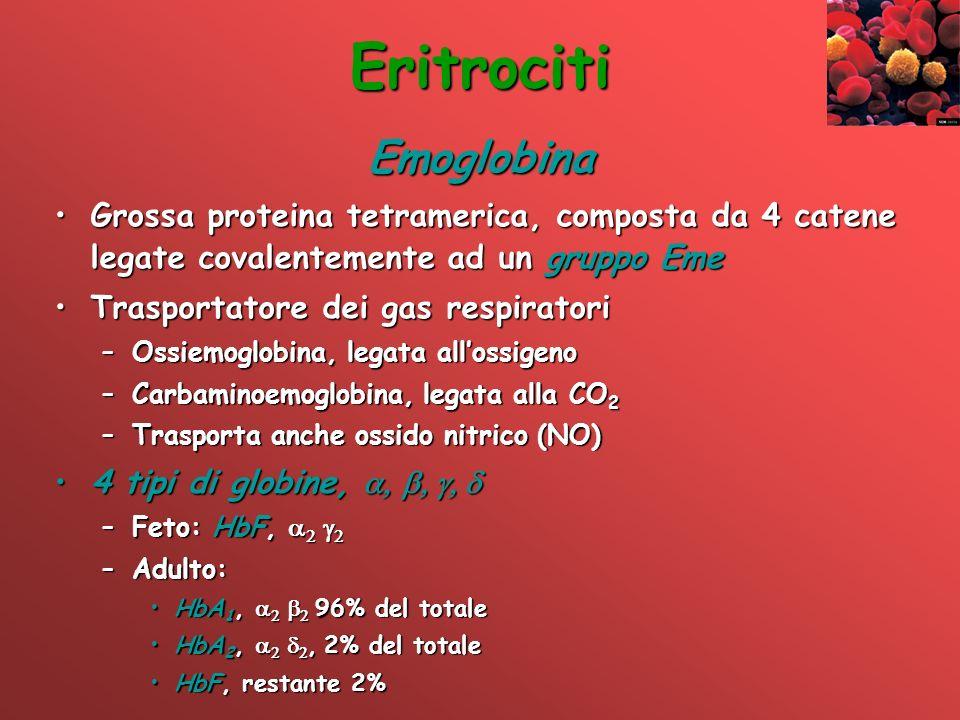 Eritrociti Emoglobina