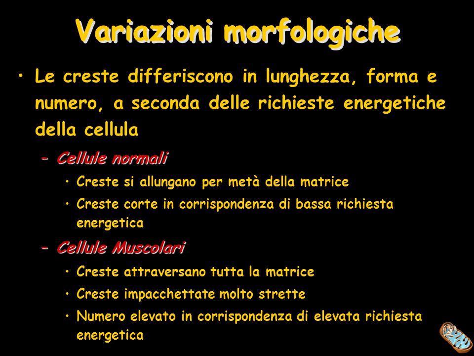 Variazioni morfologiche
