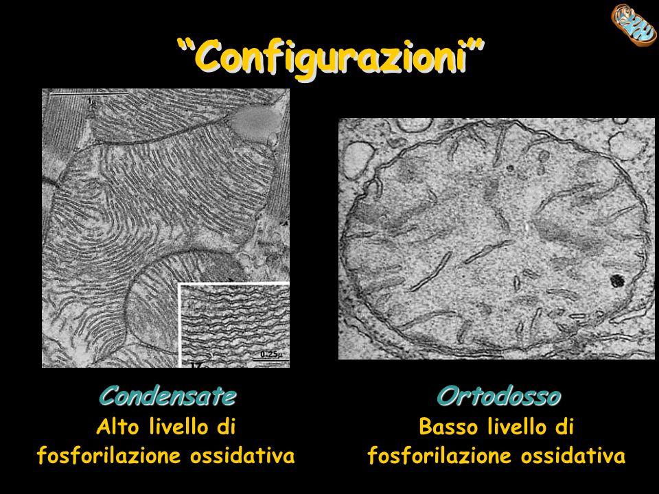 Configurazioni Condensate Ortodosso