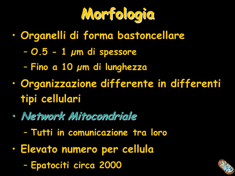 Morfologia Organelli di forma bastoncellare