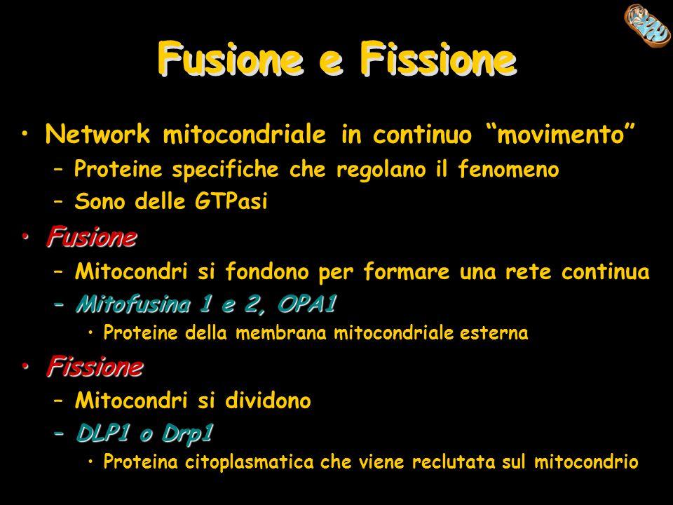 Fusione e Fissione Network mitocondriale in continuo movimento