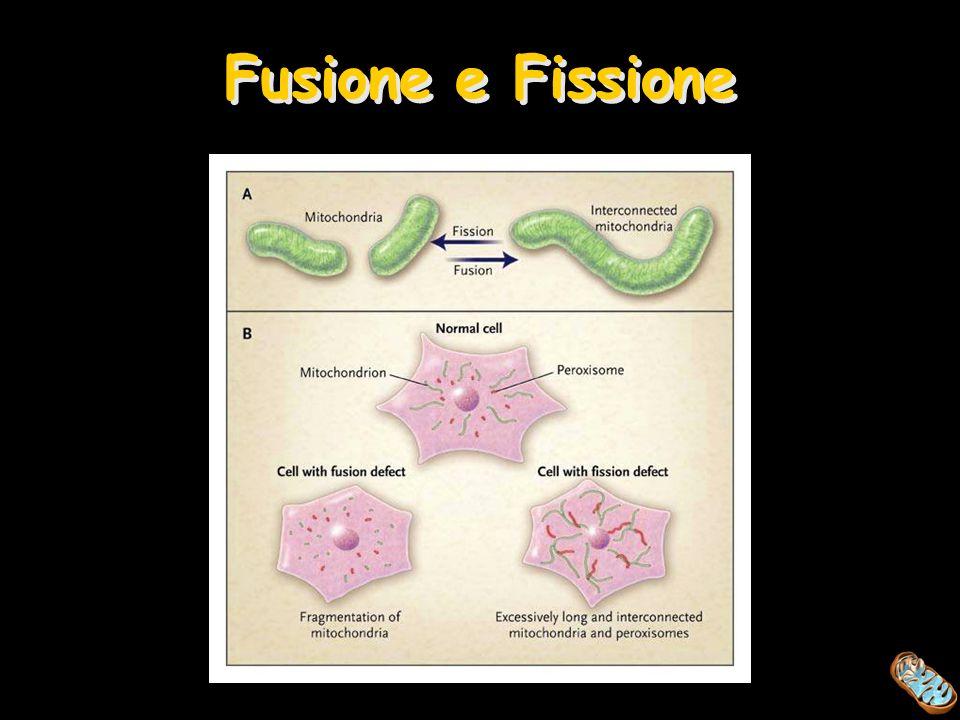 Fusione e Fissione