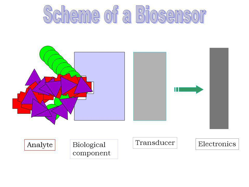 Scheme of a Biosensor Electronics Biological component Transducer