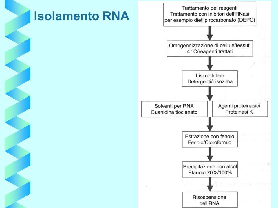 Isolamento RNA