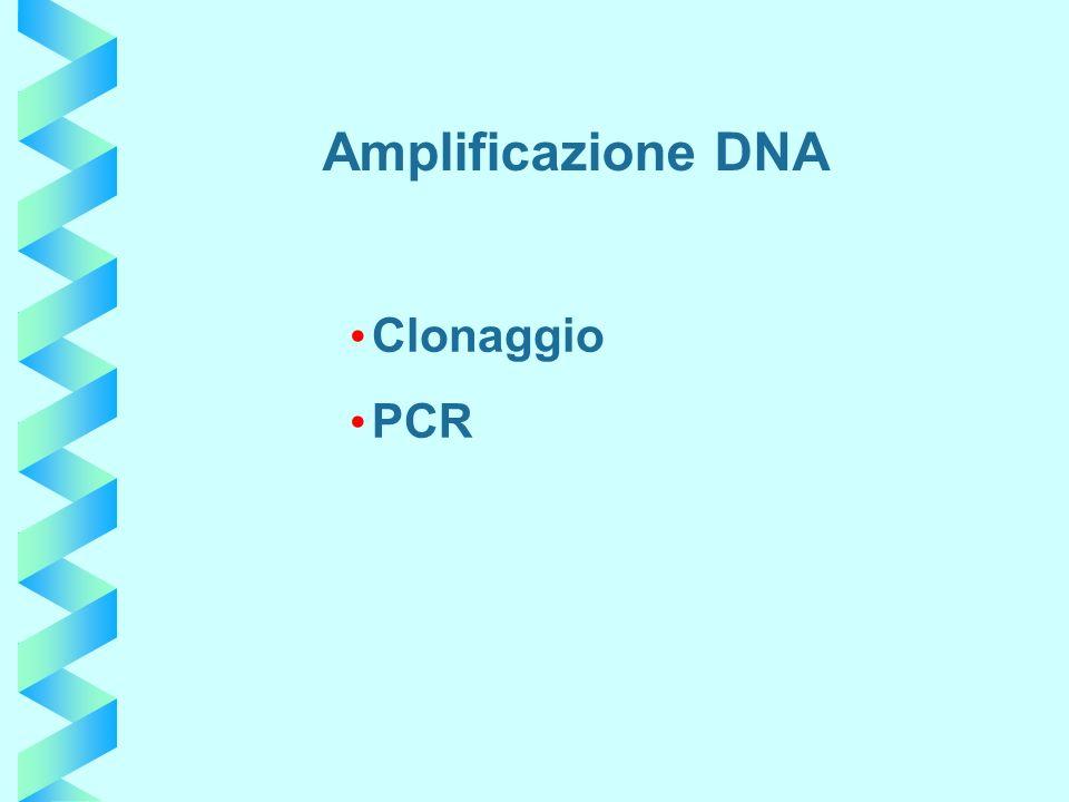 Amplificazione DNA Clonaggio PCR
