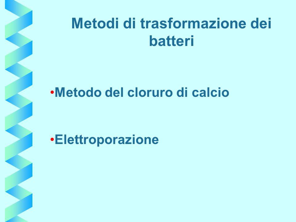Metodi di trasformazione dei batteri
