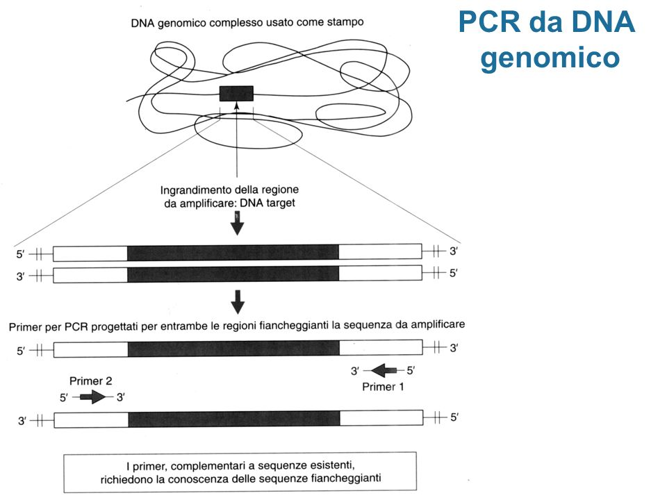 PCR da DNA genomico