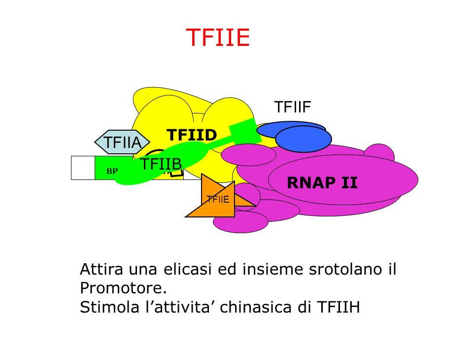TFIIE TFIIF TFIID TFIIA TFIIB RNAP II