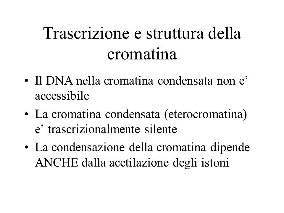 Trascrizione e struttura della cromatina