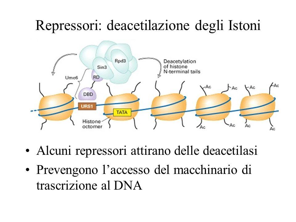 Repressori: deacetilazione degli Istoni