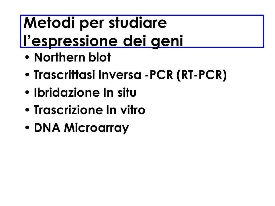Metodi per studiare l'espressione dei geni
