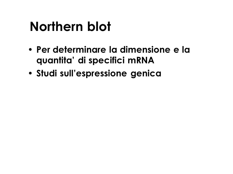 Northern blot Per determinare la dimensione e la quantita' di specifici mRNA.
