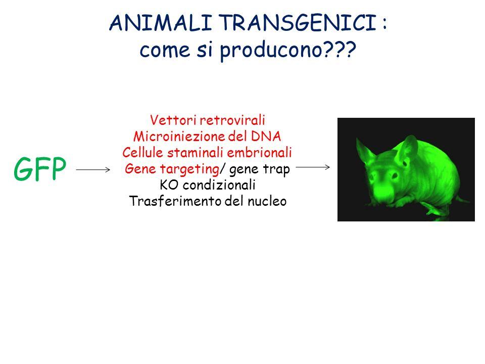 GFP ANIMALI TRANSGENICI : come si producono Vettori retrovirali