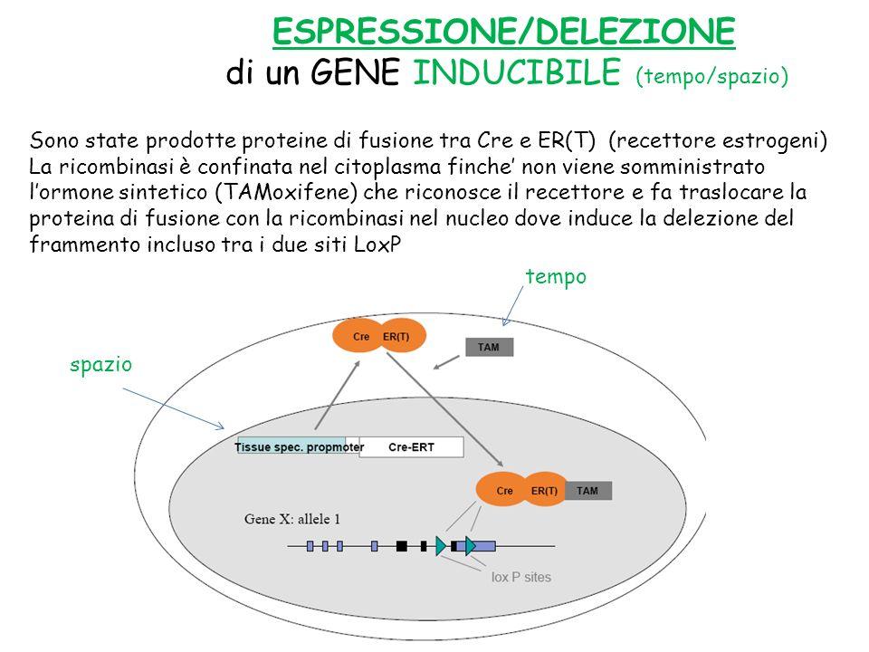 ESPRESSIONE/DELEZIONE