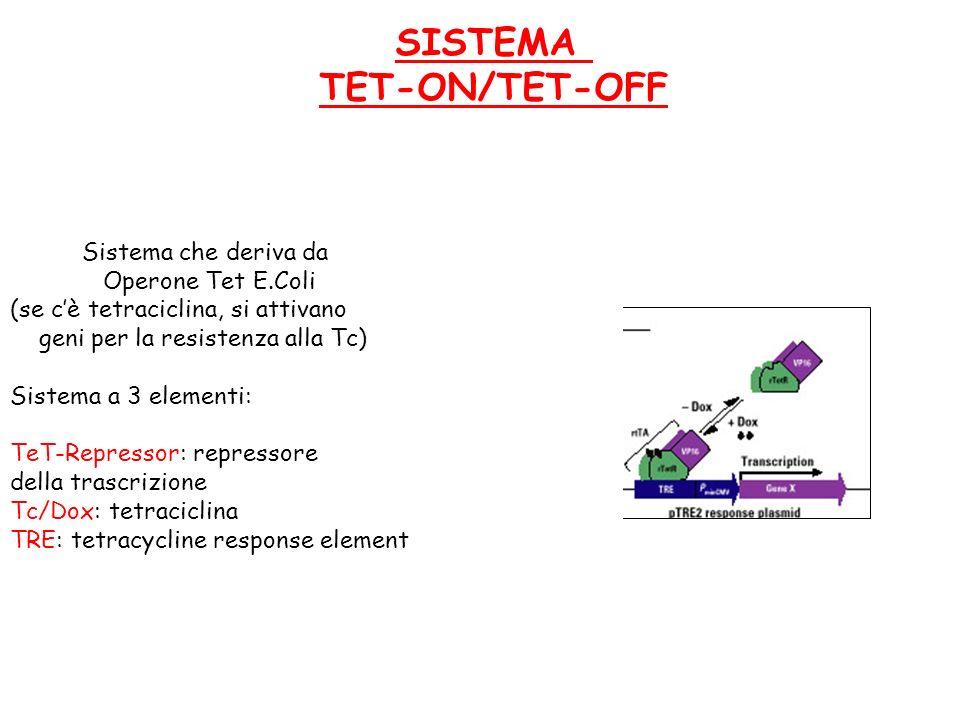 SISTEMA TET-ON/TET-OFF