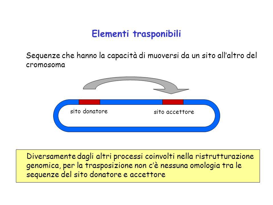 Elementi trasponibili