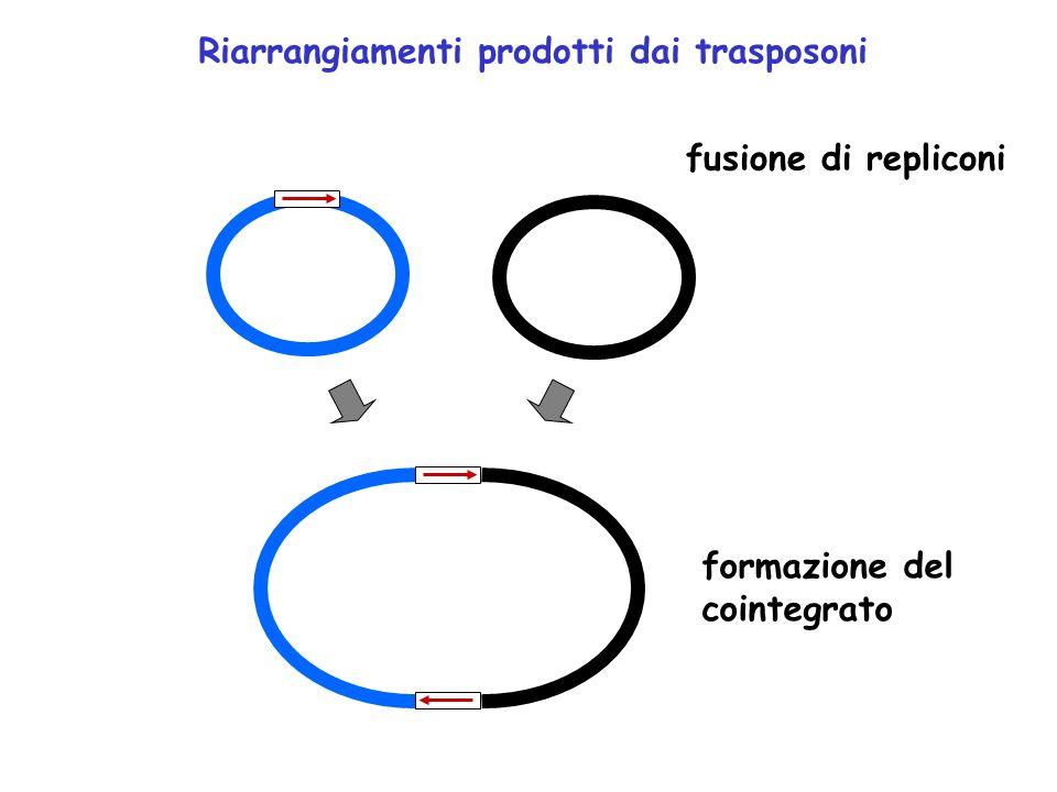 Riarrangiamenti prodotti dai trasposoni