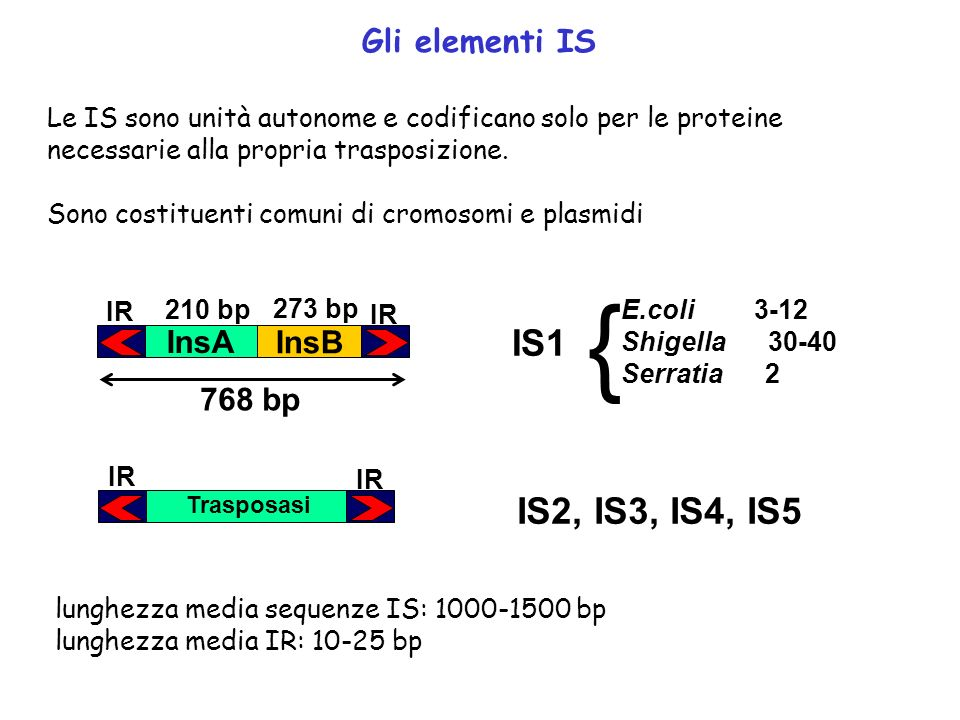 { IS1 IS2, IS3, IS4, IS5 Gli elementi IS InsA InsB 768 bp
