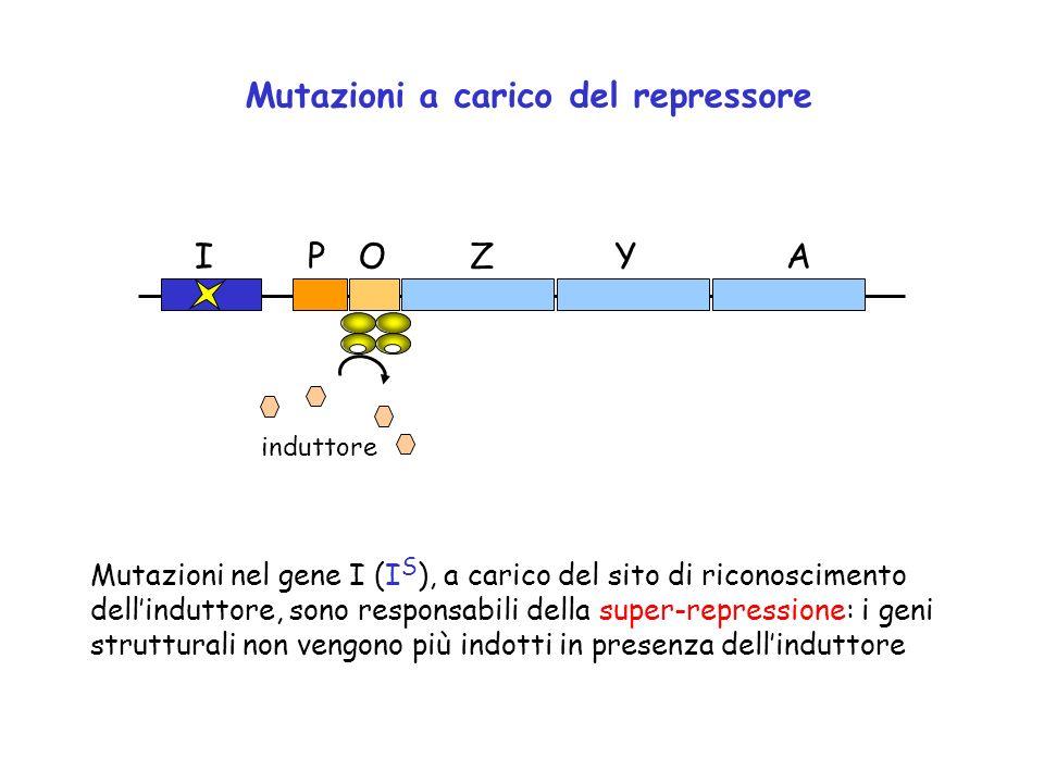 Mutazioni a carico del repressore