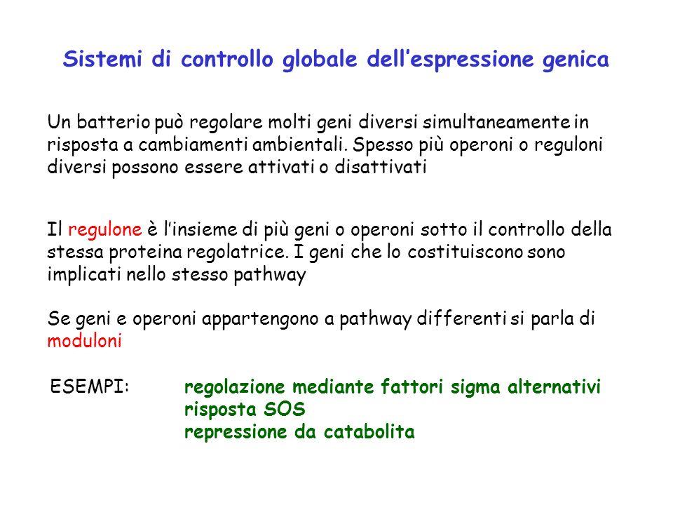Sistemi di controllo globale dell'espressione genica