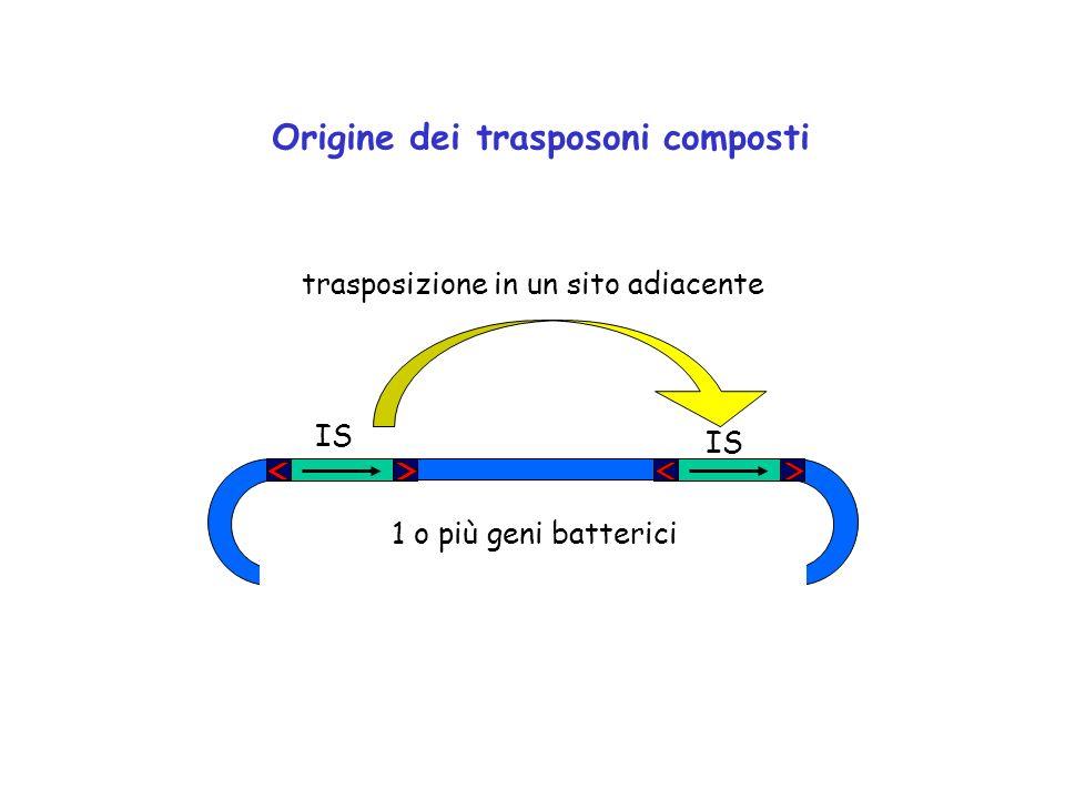 Origine dei trasposoni composti