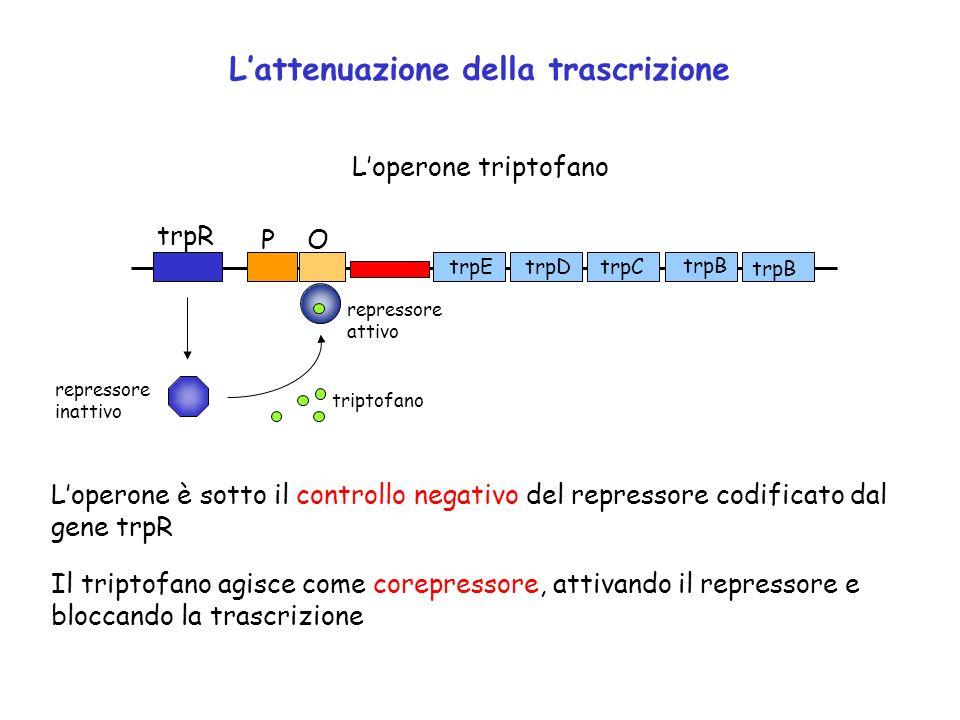L'attenuazione della trascrizione