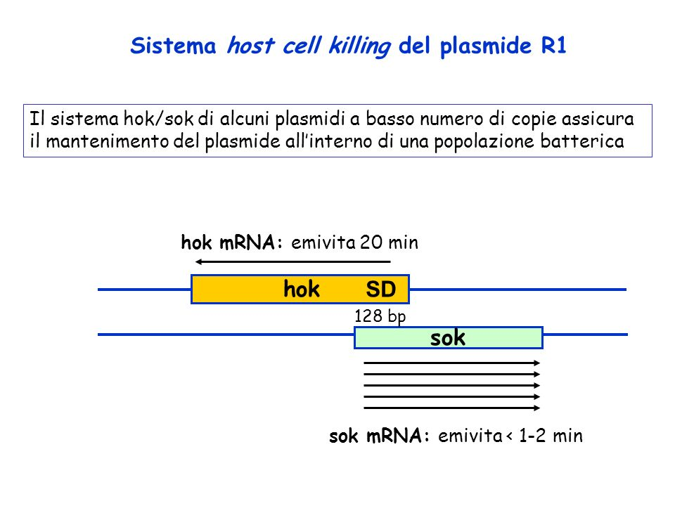 Sistema host cell killing del plasmide R1