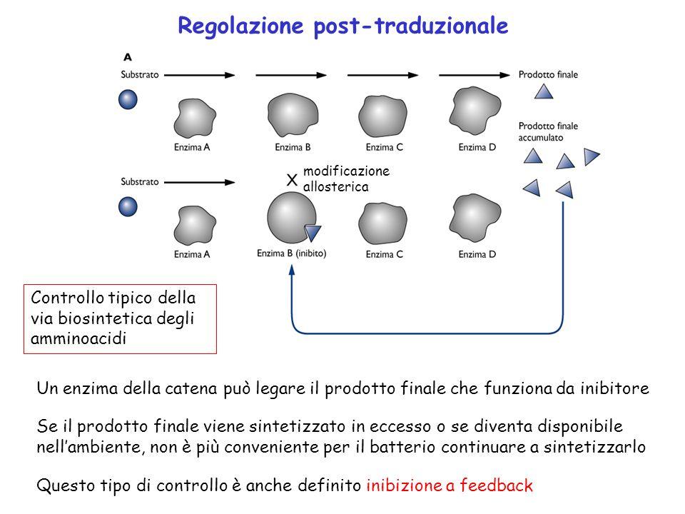 Regolazione post-traduzionale
