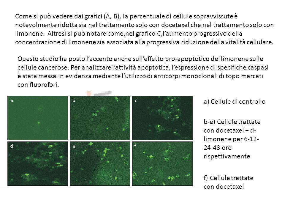 Come si può vedere dai grafici (A, B), la percentuale di cellule sopravvissute è notevolmente ridotta sia nel trattamento solo con docetaxel che nel trattamento solo con limonene. Altresì si può notare come,nel grafico C,l'aumento progressivo della concentrazione di limonene sia associata alla progressiva riduzione della vitalità cellulare.