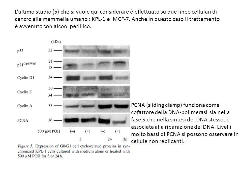 L'ultimo studio (5) che si vuole qui considerare è effettuato su due linee cellulari di cancro alla mammella umano : KPL-1 e MCF-7. Anche in questo caso il trattamento è avvenuto con alcool perillico.