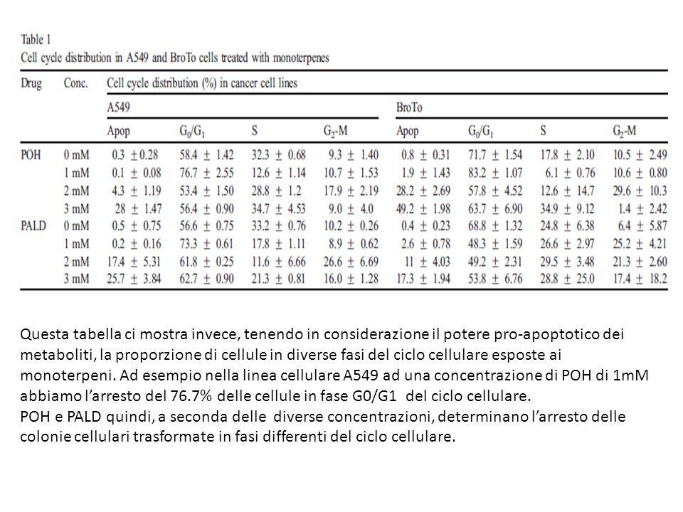 Questa tabella ci mostra invece, tenendo in considerazione il potere pro-apoptotico dei metaboliti, la proporzione di cellule in diverse fasi del ciclo cellulare esposte ai monoterpeni. Ad esempio nella linea cellulare A549 ad una concentrazione di POH di 1mM abbiamo l'arresto del 76.7% delle cellule in fase G0/G1 del ciclo cellulare.