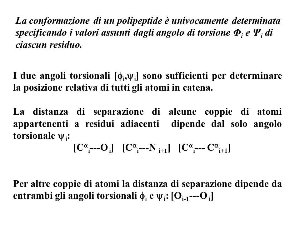 La conformazione di un polipeptide è univocamente determinata specificando i valori assunti dagli angolo di torsione Φi e Ψi di ciascun residuo.