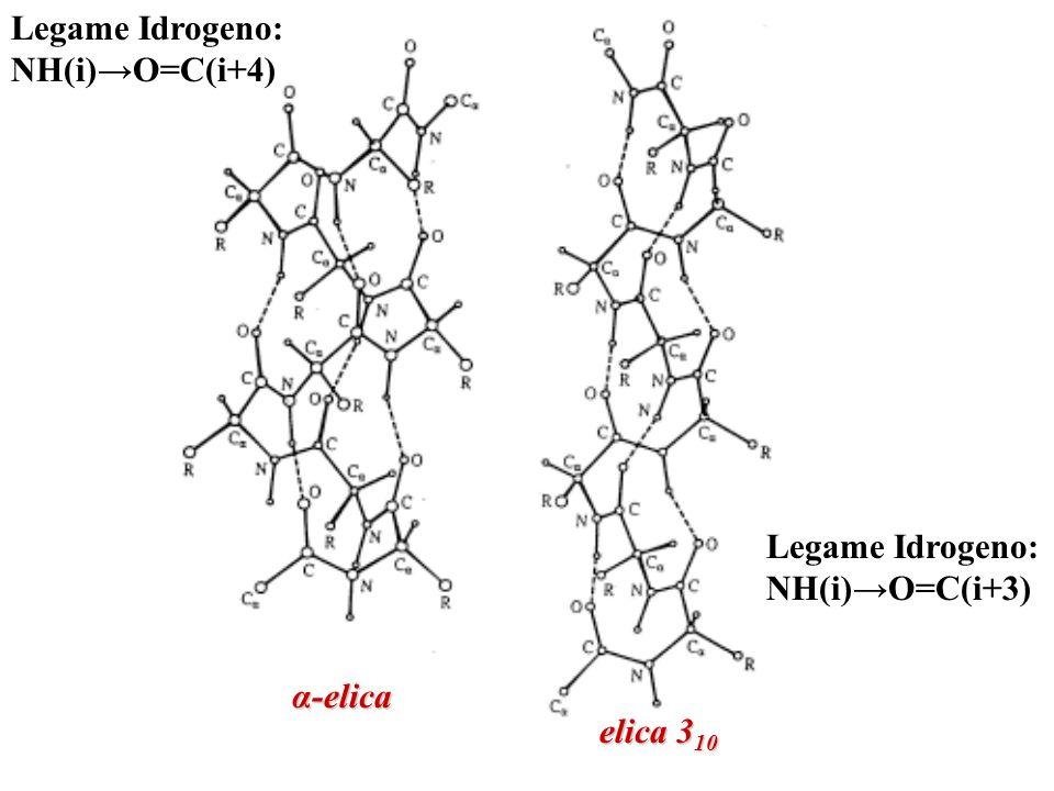 Legame Idrogeno: NH(i)→O=C(i+4) Legame Idrogeno: NH(i)→O=C(i+3) α-elica elica 310