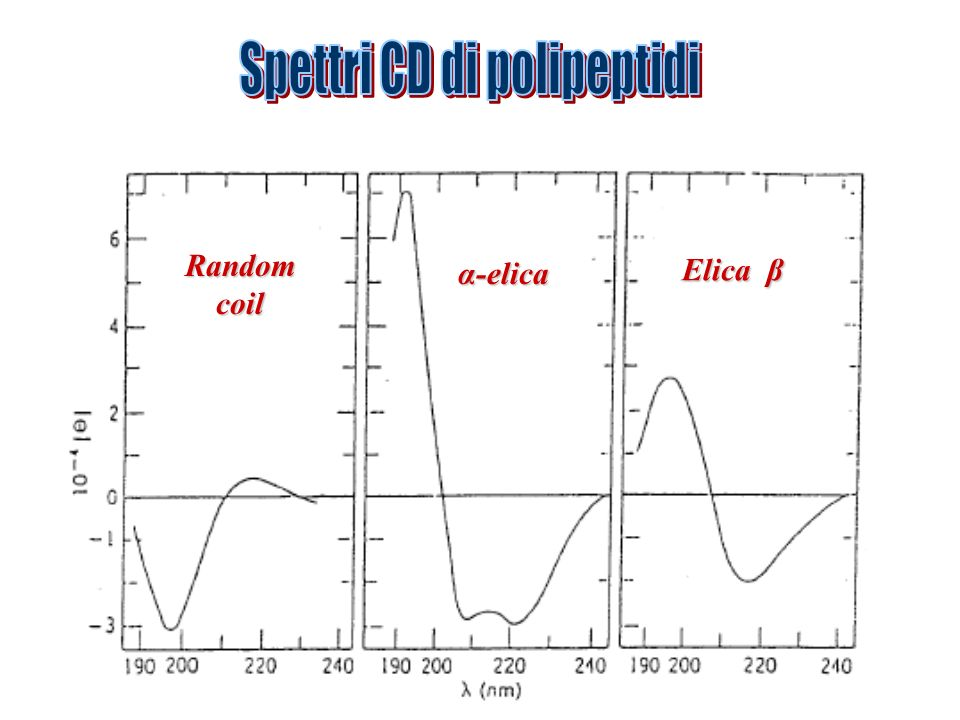 Spettri CD di polipeptidi