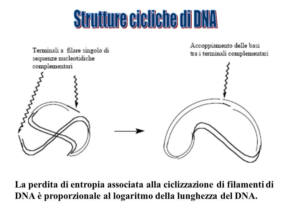 Strutture cicliche di DNA