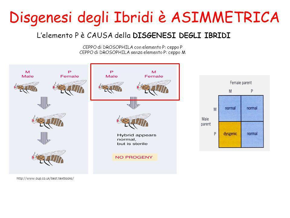 Disgenesi degli Ibridi è ASIMMETRICA