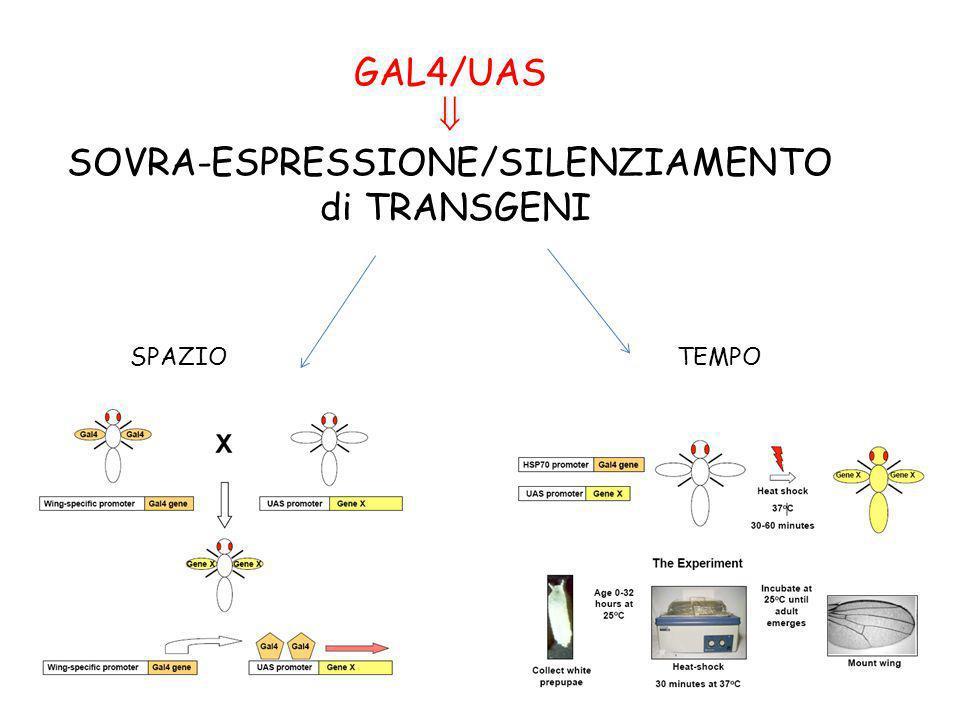 SOVRA-ESPRESSIONE/SILENZIAMENTO