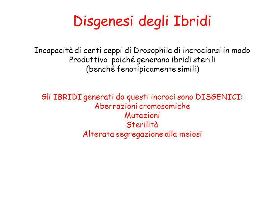 Disgenesi degli Ibridi