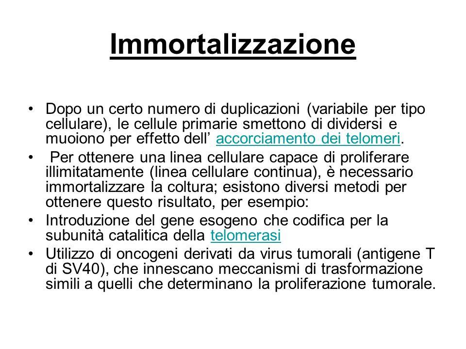 Immortalizzazione