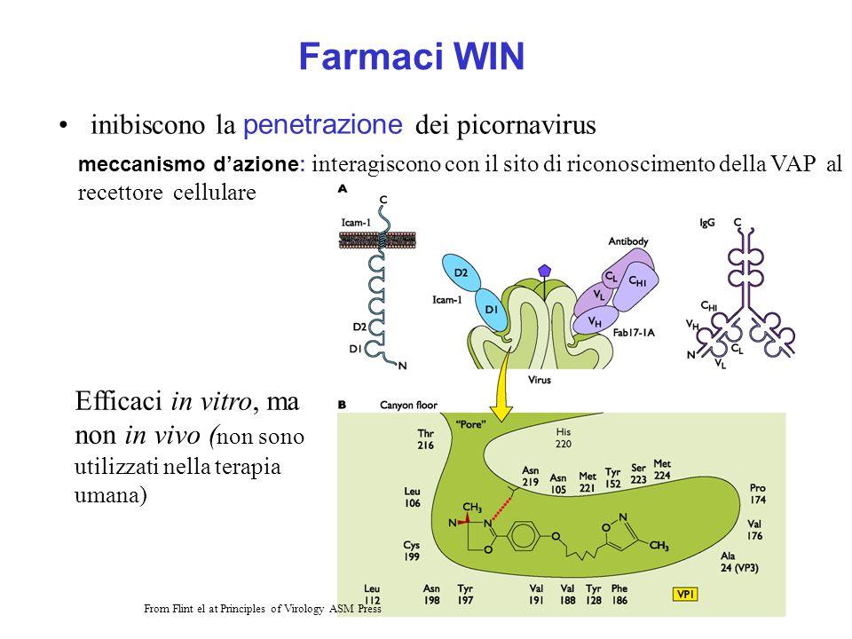 Farmaci WIN inibiscono la penetrazione dei picornavirus