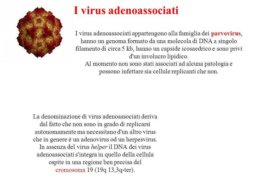 I virus adenoassociati