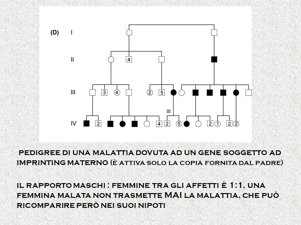 pedigree di una malattia dovuta ad un gene soggetto ad imprinting materno (è attiva solo la copia fornita dal padre)