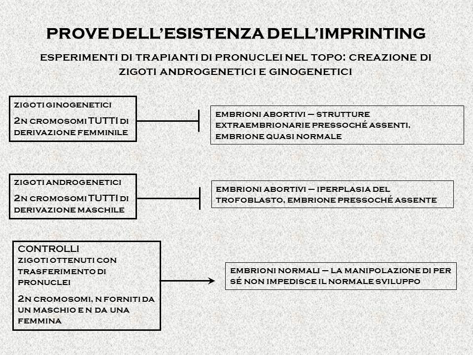 PROVE DELL'ESISTENZA DELL'IMPRINTING