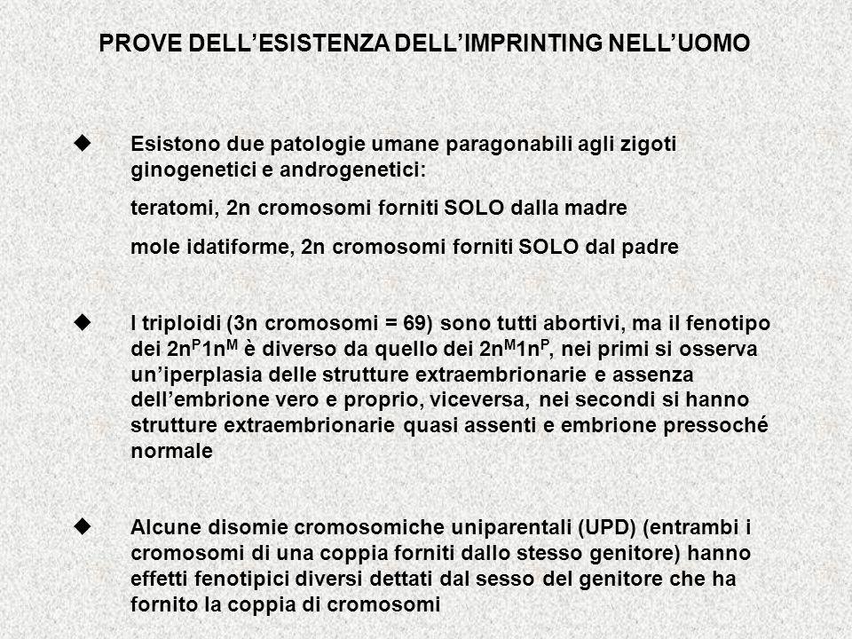 PROVE DELL'ESISTENZA DELL'IMPRINTING NELL'UOMO