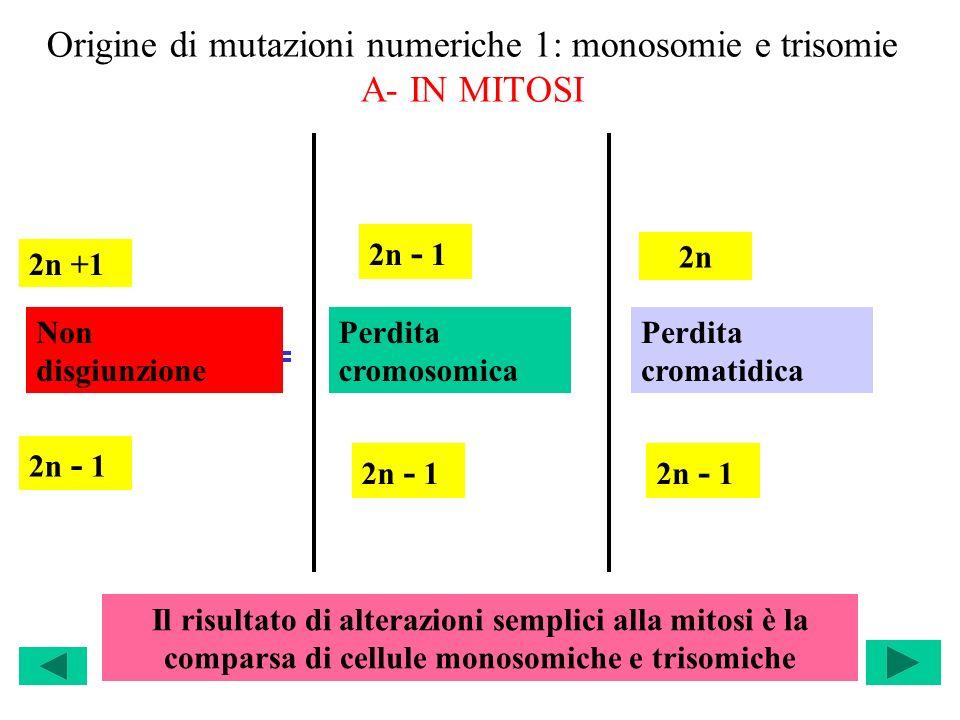 Origine di mutazioni numeriche 1: monosomie e trisomie A- IN MITOSI