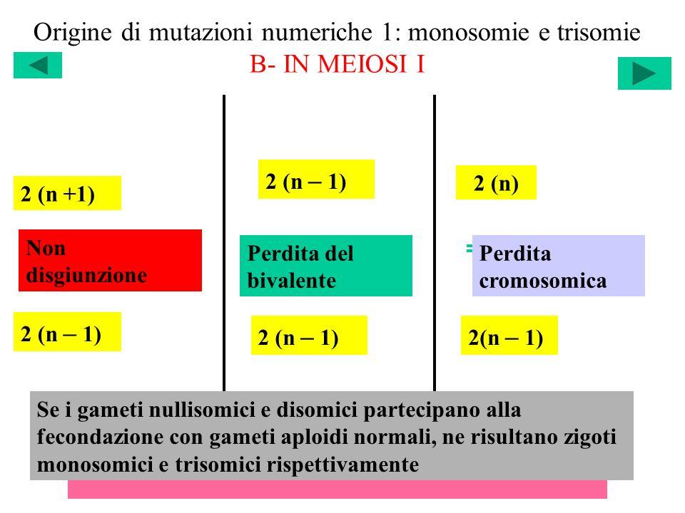 Origine di mutazioni numeriche 1: monosomie e trisomie B- IN MEIOSI I