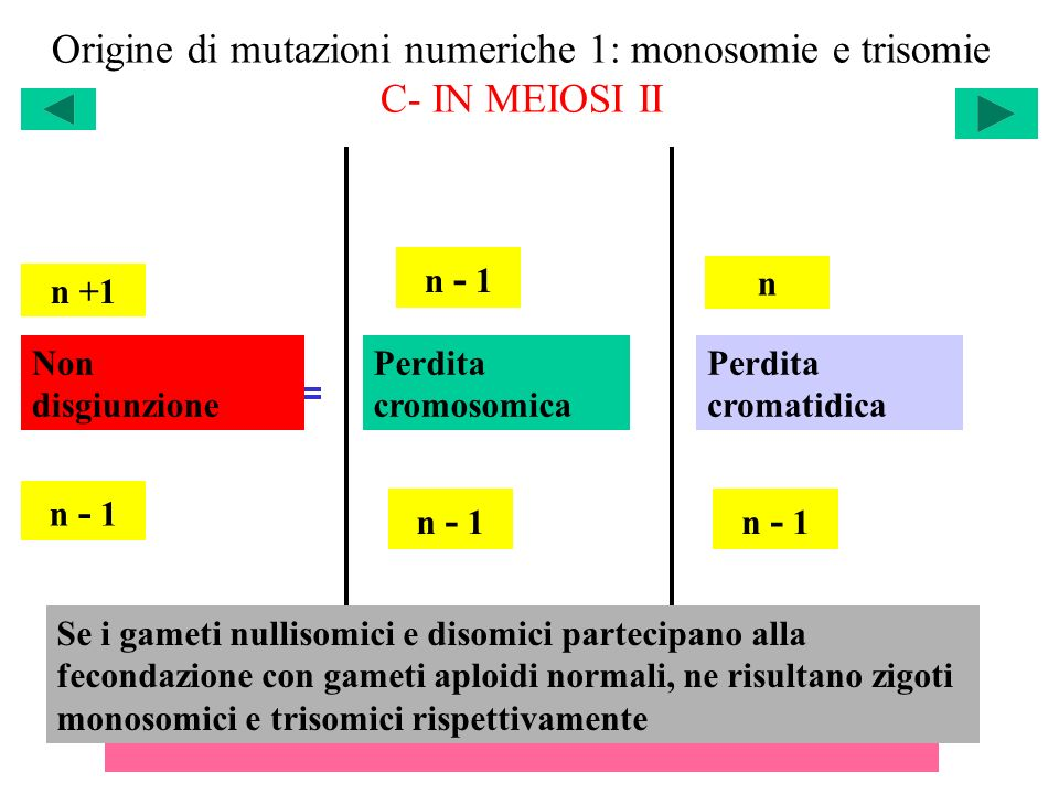Origine di mutazioni numeriche 1: monosomie e trisomie C- IN MEIOSI II