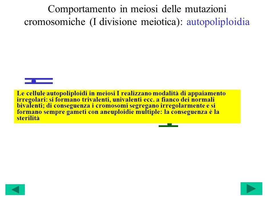 Comportamento in meiosi delle mutazioni cromosomiche (I divisione meiotica): autopoliploidia