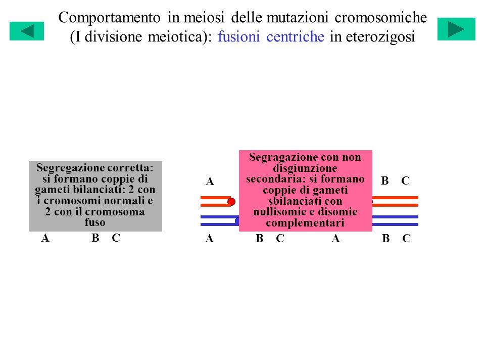 Comportamento in meiosi delle mutazioni cromosomiche (I divisione meiotica): fusioni centriche in eterozigosi